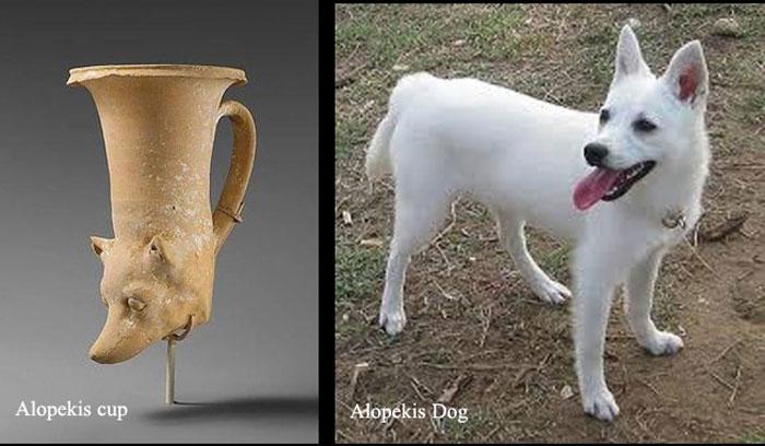 Alopekis